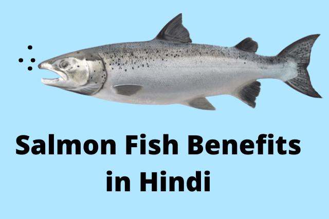 Salmon Fish11 Benefits in Hindi